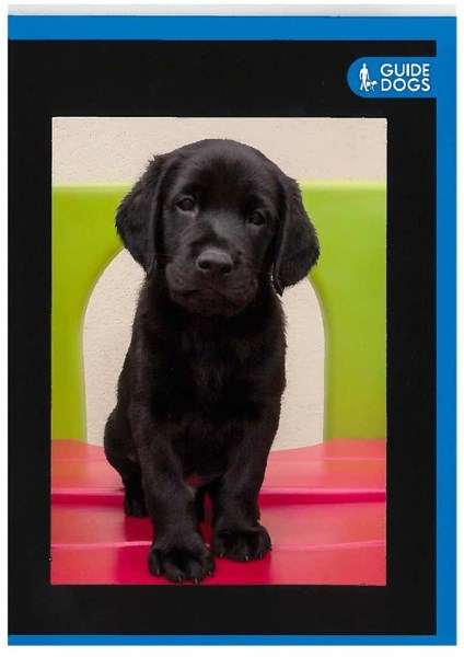 Bovis the guide dog puppy