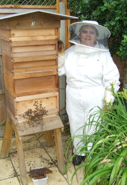 Image for Beekeeping hobby is providing award winner Carol with a real buzz!