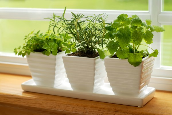 Grow your own herbs