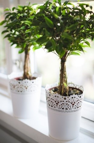Potted plants in your home